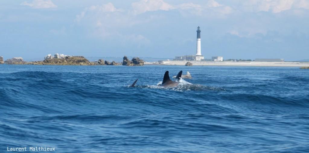 L-Malthieux_grands dauphins-Sein