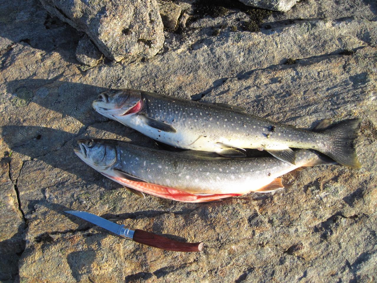 Le jeu sur la pêche sur quoi être attrapé laspe